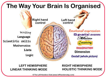 Brain organisation left hemisphere and right hemisphere